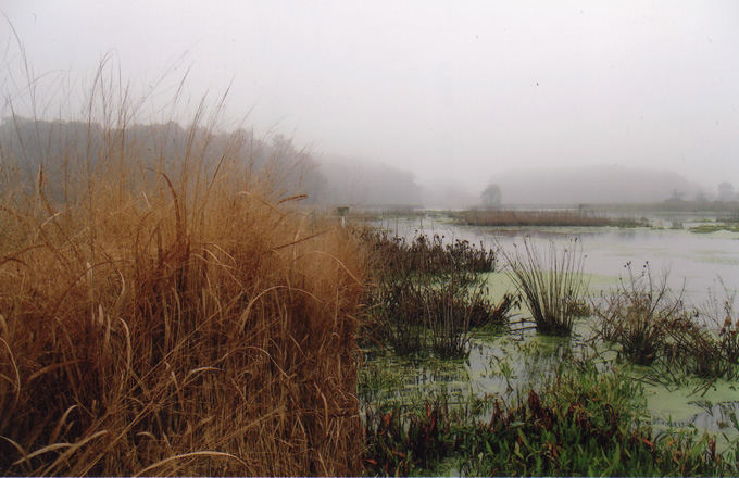 Fog over the marsh at the Armstrong Farm