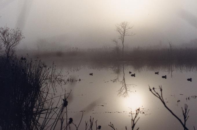 Morning mists rest over Augustine Creek