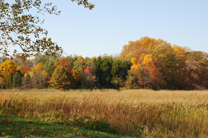 Fall splendor at the Sharp Farm