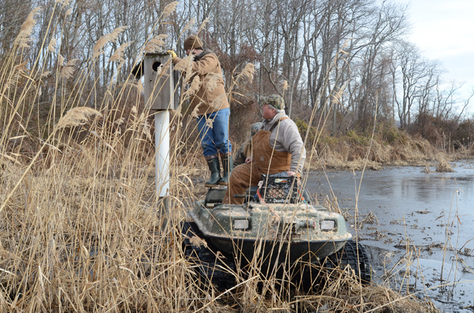 Staff and volunteers prepare for wood duck nesting season